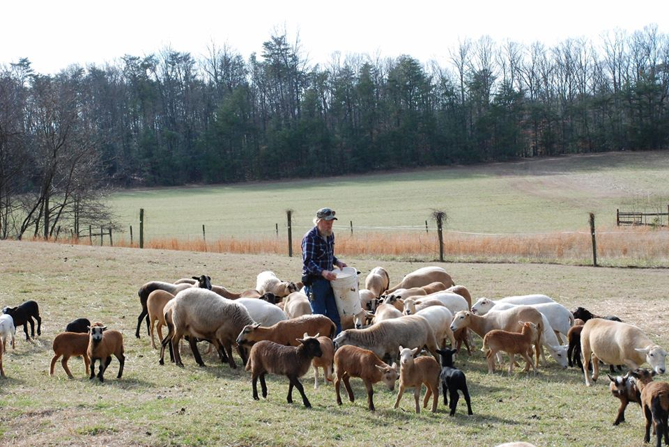 Dick Wildes and wild sheep at Summerseat